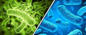 5-sintomas-que-alertan-la-presencia-de-parasitos-en-tu-cuerpo